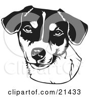 Clipart Illustration Of The Face Of A Friendly Jack Russell Terrier Dog Over A White Background by David Rey #COLLC21433-0052