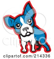 Curious Blue White And Red Boston Terrier Dog