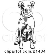 Obedient Labrador Retriever Dog Seated And Facing Front Waiting For A Command by David Rey
