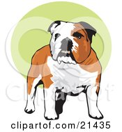 Clipart Illustration Of A Happy Brown And White Bulldog Standing Over A Green And White Background