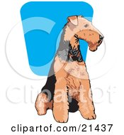 Clipart Illustration Of A Brown And Black Airedale Terrier Dog Seated And Looking To The Right