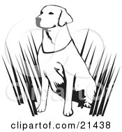 Clipart Illustration Of An Alert Labrador Retriever Dog Hunting With His Master Sitting In Tall Grasses And Waiting On A White Background