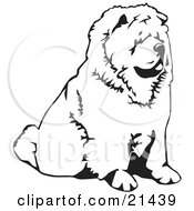 Clipart Illustration Of A Chow Chow Dog Sitting And Facing To The Right Over A White Background