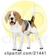 Friendly White Tan And Black Beagle Dog Wagging His Tail by David Rey