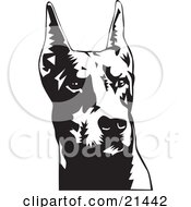 Clipart Illustration Of A Doberman Pinscher Or Dobie Dog Wiith Cropped Ears On A White Background by David Rey