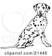 Clipart Illustration Of An Alert Spotted Dalmation Or Dalmatian Dog Seated With Its Body Facing Right Looking At The Viewer