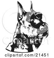 Clipart Illustration Of An Alert Schnauzer Dog With Cropped Ears Facing Right Over A White Background by David Rey