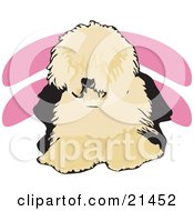 Clipart Illustration Of A Shaggy Brown And Black Old English Sheepdog Or Dulux Dog Lying Down And Facing Front