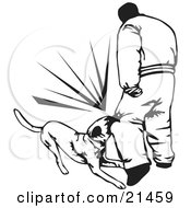 Trained Guard Dog Attacking An Intruder And Biting Him On The Knee On A White Background by David Rey