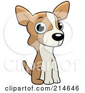 Cute Little Chihuahua Puppy Sitting
