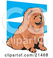 Clipart Illustration Of An Obedient Brown Chow Chow Dog With A Black Tongue Seated And Facing Right On A Blue And White Background