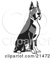 Clipart Illustration Of An Obedient Boxer Dog With Cropped Ears Seated And Facing To The Right by David Rey