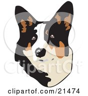 Cute Brown White And Black Welsh Corgi Dog Looking Upwards On A White Background by David Rey