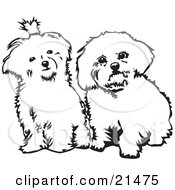 Two Cute Maltese Dogs Sitting Side By Side And Looking Curiously At The Viewer On A White Background by David Rey