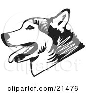 Panting Husky Dog In Profile Over A White Background by David Rey