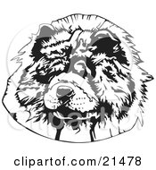Clipart Illustration Of The Face Of A Hairy Chow Chow Dog Looking Slightly To The Left On A White Background