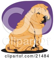 Clipart Illustration Of A Cute Wrinkled Brown Shar Pei Dog Seated And Looking Back Over His Shoulder