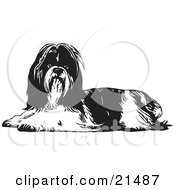 Clipart Illustration Of A Long Haired Shih Tzu Dog Lying Down And Looking At The Viewer On A White Background