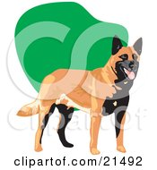 Clipart Illustration Of A Panting Black And Brown Belgian Sheepdog Standing In Front Of A Green And White Background