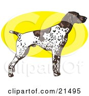 Clipart Illustration Of A White And Brown Spotted German Shorthair Pointer Dog Standing Alert In Profile Facing Right
