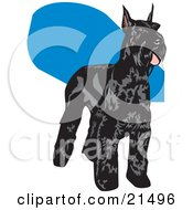 Clipart Illustration Of A Black Schnauzer Dog With A Shiny Coat Standing And Facing Right