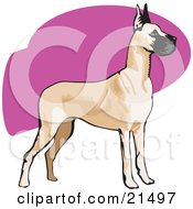 Clipart Illustration Of An Alert Brown And Black Great Dane Dog With Cropped Ears Standing And Facing To The Right