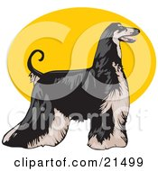 Long Haired Afghan Hound Dog Standing Proudly In Profile Facing To The Right Over A Yellow Oval On A White Background