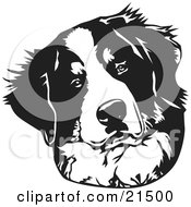 Clipart Illustration Of A Curious Bernese Mountain Dog Tilting His Head On A White Background by David Rey #COLLC21500-0052