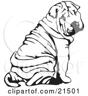 Clipart Illustration Of A Wrinkled Chinese Shar Pei Dog Sitting And Looking Back Over His Shoulder