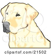 Yellow Labrador Retriever Dog With A Black Nose Waiting Patiently And Looking Off To The Left While Hunting by David Rey