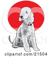 Clipart Illustration Of A Seated Gray Bedlington Terrier Dog Wearing A Collar And Looking Off To The Left by David Rey #COLLC21504-0052