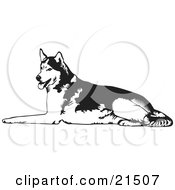 Clipart Illustration Of A Tired Husky Dog Lying On The Ground And Panting After Sledding by David Rey #COLLC21507-0052