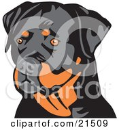 Alert Tan And Black Rottweiler Dog Looking To The Left Over A White Background by David Rey