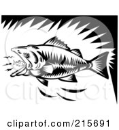Black And White Largemouth Bass Eating A Tiny Fish