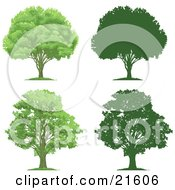 Collection Of Lush Green And Mature Trees With Their Silhouettes On A White Background