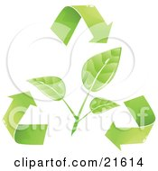 Green Plant Leaves Being Circled By Recycling Arrows Over A White Background