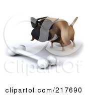 Royalty Free RF Clipart Illustration Of A 3d Chubby Dachshund Dog Wearing Shades And Staring At A Bone