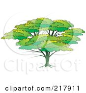 Royalty Free RF Clipart Illustration Of A Lush Green Tree With A Large Canopy by Lal Perera