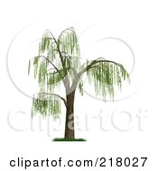 3d Weeping Willow Tree With Green Foliage