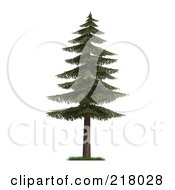 3d Mature Fir Tree With Green Foliage