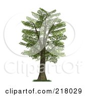 3d Mature Oak Tree With Green Foliage