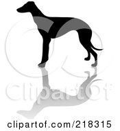 Royalty Free RF Clipart Illustration Of A Black Silhouetted Greyhound And Reflection by Pams Clipart