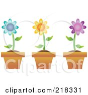 Royalty Free RF Clipart Illustration Of A Digital Collage Of Three Colorful Daisies In Terra Cotta Pots
