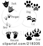 Royalty Free RF Clipart Illustration Of A Digital Collage Of Duck Penguin Bird Raccoon Dog Cat And Bear Tracks With Words by Pams Clipart