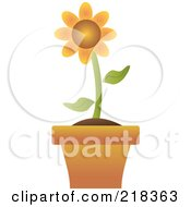 Single Orange Flower In A Terra Cotta Pot