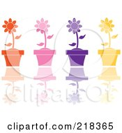Digital Collage Of Four Colorful Daisies In Terra Cotta Pots With Reflections