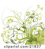 Clipart Picture Illustration Of Flowering Green Plants With Circles On A White Background