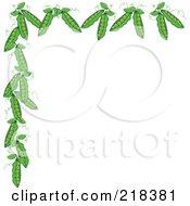 Border Of Organic Green Pea Pods