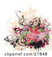 Cluster Of Grunge Paint Splatters Pink And Black Scrolls And Pink Flowers With Green Leaves Over A White Background