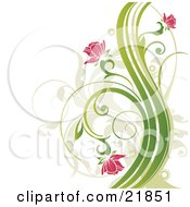 Clipart Picture Illustration Of Pink Flowers Blooming On Curly Green Plants Over A White Background